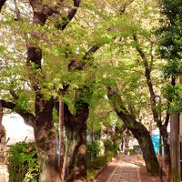 東京散歩♪ ⑨ ~またまた春の嵐のあと~白金の桜&白金三光町商店街&COMME PARIS