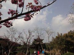 〔中国〕鎮江鍋蓋麺と揚州飲茶の旅 その4★揚州
