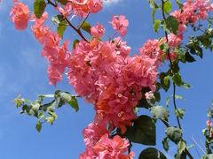 北マリアナ連邦へようこそ サイパン・ロタ・テニアン ★サイパンの花