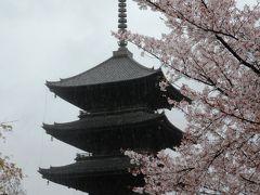 京都花めぐり 東寺