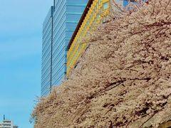 目黒川の桜a お花見クルージング(往路) ☆天王洲桟橋から目黒雅叙園付近