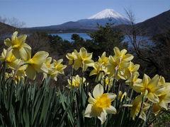 春だ!桜だ!富士山だ!!