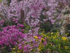 京の春爛漫 洛北の原谷苑は百花繚乱 2013