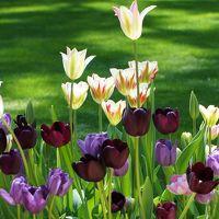 「オランダ大使公邸庭園 特別一般公開」に行ってきました!