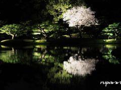 栗林公園 松&桜~ライトアップ 夕暮れの桜 丸亀城
