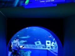 しながわ水族館a  トンネル水槽で水中ショー ☆ダイバーがエイに餌付け