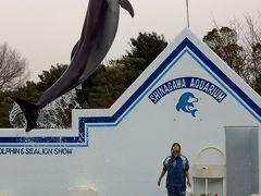 しながわ水族館b  イルカ・アザラシの活躍ショー ☆大ジャンプに歓声高く