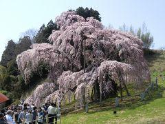 2013年4月 福島の旅 第2日 三春の滝桜、不動桜