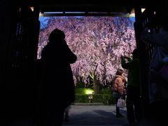 2013年 JR東海 そうだ 京都、行こう。キャンペーン寺院 妙心寺 退蔵院へ