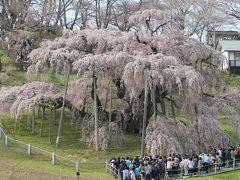 満開の三春滝桜満喫の日帰り旅 2013