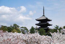 京都で 2013年度六回めのお花見① 出発~原谷苑~仁和寺篇