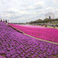 満開の芝桜を訪ねて東京ドイツ村へ