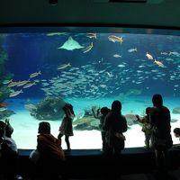 サンシャイン水族館へ行ってきました