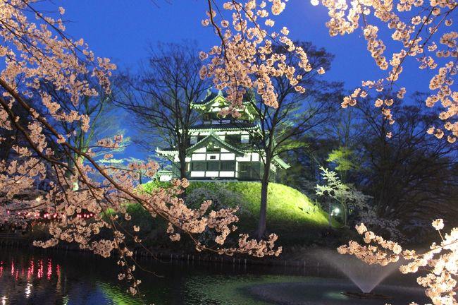 今年は夫の転勤の可能性が大だったため、もう見られないかと思っていた<br />高田公園の夜桜ですが、転勤はなかったので、見に行くことができました。<br />これで、3年連続3回目です。<br />2011年は震災直後だったため、ライトアップも抑えられ、開花状況も七分咲き<br />寒さもあり、満足度は低め。<br />2012年は、お天気も良く、気温も平年並みで暖かく、桜もほぼ満開で満足できました。<br />2013年は、3日前に満開になったけれど、ずっと雨続きで、やっと晴れたのと土曜日・満開も重なり<br />観光客も前年の1.5倍ぐらいじゃないかというほどで、人出が多かったです。<br /><br />さすがに3年連続で見てると、自分自身も飽きてきたのと、人も多く、満足度は前年より3割ダウンかな?<br />でも、さすがに来年は引っ越している可能性が大で、今年で見納めかと思われます。