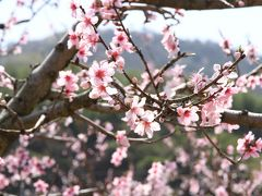 和歌山県紀の川市の桃源郷へ。その後大阪府蜻蛉池公園、和泉リサイクル環境公園、堺市鉢が峰とたくさん回ってきました。
