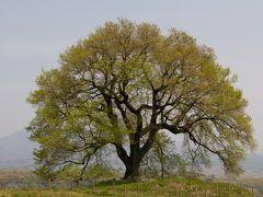 桜を求めて・・・甲州・気ままな高原の旅♪(前編)