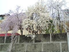 春の韓国・アジュンマ一人旅♪ 2日目-① ~高速バスに挑戦!清州へGO~