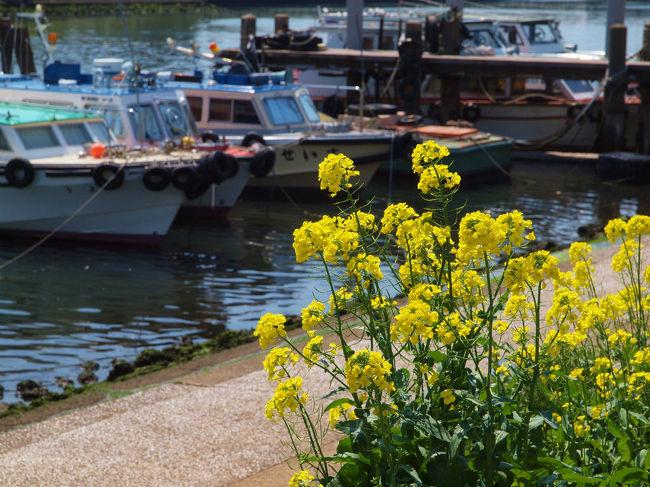 地元の皆さんが作り上げた しながわ花街道<br /><br /> 春の日の散歩にピッタリの穏やかな<br /><br />美しい景色を見せてくれました。<br /><br />しながわはな海道<br />http://www.touch-i-love.co.jp/hanakaido/hanatop.htm <br /><br />義臣旅記<br />旧東海道をぶらぶら−6 立会川と坂本龍馬<br />http://4travel.jp/traveler/jiiji/album/10430981/<br /><br />東海道ぶらぶらー1 品川宿<br />http://4travel.jp/traveler/jiiji/album/10426282/<br />東海道ぶらぶらー2 品川宿 荏原神社 寒緋桜<br />http://4travel.jp/traveler/jiiji/album/10427489/<br />東海道ぶらぶらー3 青物横丁まで<br />http://4travel.jp/traveler/jiiji/album/10428519/<br />東海道ぶらぶらー4 品川寺から<br />http://4travel.jp/traveler/jiiji/album/10430201/