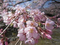 春だ。桜を見に行こう② ~長野・高遠城址公園と光前寺編~