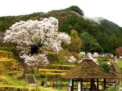 春爛漫♪ 宇陀の寺社・桜めぐり