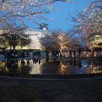 桜を楽しみに新潟へ