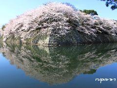 2013青春18切符一人旅 滋賀 彦根城 空に浮かんださくら