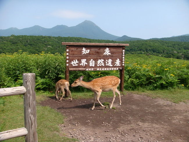 梅雨があけて猛暑が続く大阪、涼を求めて道東に出かけてきました。<br /><br />爽やかで涼しかったです、と言いたいところですが、暑かったです。<br />6日は北海道で観測史上最高という記録がでるほどの猛暑日でした。<br /><br />でも、旅的には晴天続きで景色は最高、知床・摩周湖ではこれ以上ないと思えるほど素晴らしい景観に出会えました。<br /><br />雄大な自然に抱かれ、こころ安らぐ日々でした。<br /><br />
