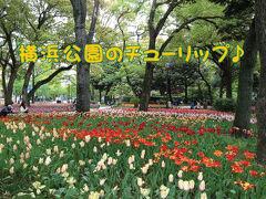 みなとみらいさんぽ1☆横浜公園のチューリップ♪(2013)