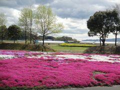 芝桜が満開。(笠岡 太陽の広場)と、近くの道の駅(笠岡ベイファーム)