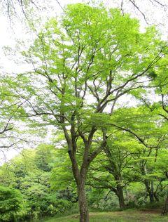 佐倉市散策(38)・・佐倉城址公園にグリーンアドベンチャーコースを訪ねます。