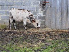 カルヴァドスの牛は、オレンジのチークに真っ黒アイシャドー