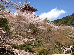 桜の京都へおこしやす~一日ガイドで自分も楽しんだ♪