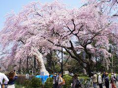 お花見で榴ヶ岡公園へ。
