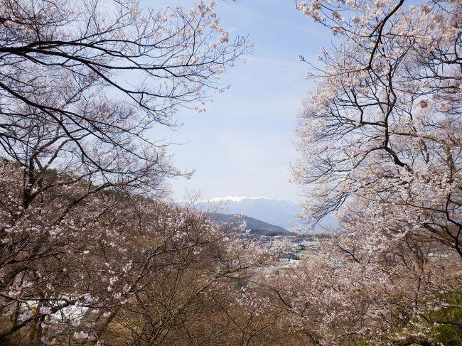 早咲きだったり、週末は天気が悪かったりで、<br />2013年のさくらを堪能できなかったので、<br />思い切って、高遠まで来て見ました!<br /><br />いやぁ〜。やっぱりいいわ。<br />はじめて来たけど。