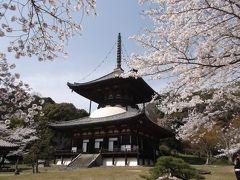根来寺(和歌山県)で桜を見てきました!(2013年4月)