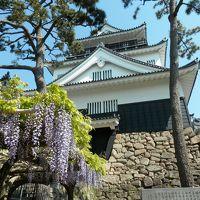 岡崎城登城 竹千代の 過ごした城は 藤満開