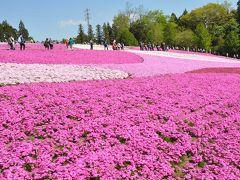秩父・羊山公園芝桜まつり