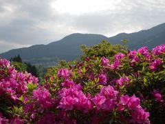 巨勢(こせ)の道を歩いて関西花の寺第22番・船宿寺(せんしゅくじ)へ