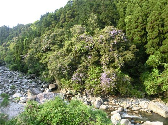 九年庵近くのめがね橋に<br />大きな山藤が見えましたので、<br />立ち寄ってみることにします。