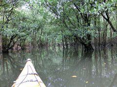 西表島 マングローブの川