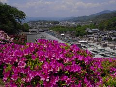京都 蹴上浄水場の躑躅
