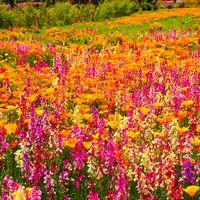 お天気に恵まれたGW -Vol.1 ザ・トレジャー・ガーデンでネモフィラなどのキレイで鮮やかな花々に癒された1日♪