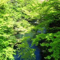 子どもと一緒に楽しむ、鶴仙渓の萌黄色の若葉が眩しい山中温泉