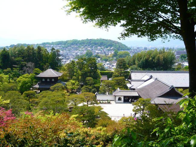 そうだ!京都へ行こう!。。。と思い立ったのが出発の10日前。<br /><br />いつ行く?から始まりまずは宿泊する宿探しから始めて、<br />運よく、嵐山近くの宿を手配することができました。<br /><br />本当は5月4日〜の一泊が希望でしたが、どこも一杯で、<br />5月5日〜の一泊でケッテ〜イ!。<br />でもこれが今回の京都旅行でのちょこっとラッキーの始まりでした。<br /><br />自宅を出発して数時間。朝の8時ごろに嵐山のお宿に到着ぅ<br />チェックインは午後3時からなので、車だけ駐車させてもらい<br />(駐車させてもらえるかは予約時に確認しましたよ)<br />今回の目的でもある「東映太秦映画村」へGO!<br />混雑を予想し、この度は嵐電で太秦へ。<br /><br />嵐電「太秦広隆寺」駅から映画村までは徒歩で15分ほど。<br /><br />映画村到着!さすがゴールデンウィークということで、チケットを<br />購入するお客さんが行列です。<br />いつもの休日がどれぐらいの混雑か分かりませんが、ものすごい数<br />でした。<br />チケットは前もって購入していって正解です。<br />ホテルによっては「通札」と書いた招待券を販売しておりますので<br />宿泊するホテルに確かめると良いです。<br /><br />忍者ショーや南京玉すだれはライブで見ると結構面白い。<br />その他にもアトラクションがありましたが、あまりの行列で断念。<br />アトラクション以外にも東映俳優さんの説明付き映画村散策や<br />花魁道中見物等楽しむことができました。<br />昼食はと言えば、レストランはどこも一杯!お弁当を販売しており今の季節なら外で食べても気持ちよいです。<br />キュウリを丸々一本浅漬けが200円で販売していて、これがそこそこ<br />おなかの足しになるのでおすすめです。<br />がぶりと一口!冷たくておいしかった〜<br />(結局お昼ごはんは食べ損ねてしまいました。残念)<br /><br /><br />午後からは映画村を後にして、金閣寺へ。<br />再び嵐電と市バスを乗り継ぎ金閣寺に到着!<br />市バスは満員御礼。境内も満員御礼。拝観札所の係員は。。。<br /><br />それでもあの煌びやかなる金閣寺は別格です。<br /><br />でもね、庭の苔が痛んでいるのは悲しかった。<br />お庭のお手入れも大切です。<br />お庭が美しくてこそ建物が引き立つのだと思う。。<br /><br />2日目は「茶寮 宝泉」で名物わらび餅をいただきながら<br />ステキなお庭を拝見。<br />とてもモチモチなわらび餅で初めての食感でした。<br />ご馳走様でした。<br />もちろん、わらび餅以外にも色々とありますので、<br />わらび餅が苦手な方でもおすすめです。<br />http://www.housendo.com/housen.html<br /><br />次に、銀閣寺を拝見。金閣寺に比べると建物自体は質素ですが<br />その分お庭が凝っていて、モダニズムを感じられます。<br />個人的には銀閣寺が好みだったでしょうか。<br /><br />締めくくりは四条河原町界隈へ<br />高島屋で昼食をいただき、新感覚的八つ橋のお店「nikiniki」で<br />http://www.nikiniki.co.jp/<br />お買い物をした後、先斗町〜鴨川〜錦市場へと散策し<br />帰路へ。<br /><br />今回は1泊2日とかなり無理なスケジュールでした。<br />その割には色々と観光できたので、楽しめました!<br />娘の部活が忙しくなると家族で旅行へ行くことが出来なく<br />なることもあり、今回が最後の家族旅行かもしれません。<br /><br />でも、また行きますよ、京都。<br /><br /><br /><br /><br />