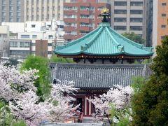 東京の桜  2013