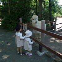 富士山麓に鳴く動物たち【富士旅行記3/3】