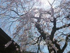 ゴールデンウィークの北軽井沢と軽井沢♪ Vol3 ☆旧軽井沢の散策と美しい桜を愛でる♪