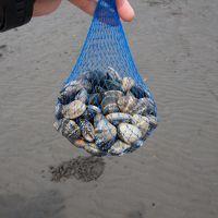 都心近くで潮干狩り・エイに触れる葛西臨海公園の水族館へ