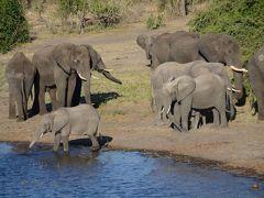 野生動物に会いに行くクルーズとドライブ(アフリカ南部デビューの旅)