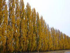 2013GWは初秋のニュージーランドへ(その4)~南島マウントクック・ワナカ・アロータウン・クイーンズタウン~